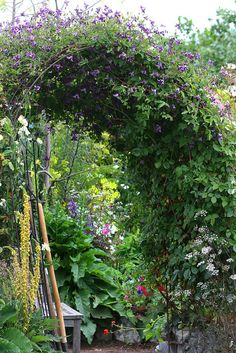 Clematis viticella arbor by anniesannuals, via Flickr