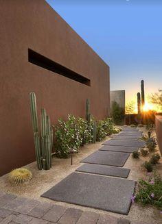 xeriscape / cacti garden