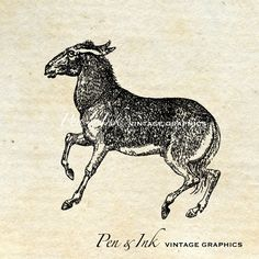 Donkey Digital Vintage Graphic Antique Image by PenandInkVintage