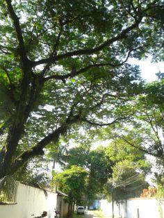 Arborização