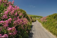 Lane to Mawgan Porth, Cornwall