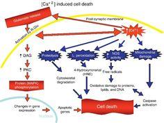 excitotoxicity magnesium nmda
