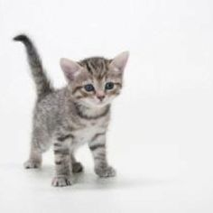 seriously...I could become a cat hoarder...so cute!