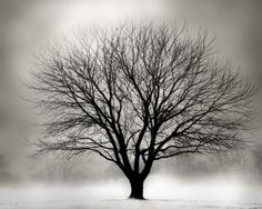 Possibly my favorite tree photo, ever.
