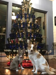 Merry Dog Christmas. Let us build your custom tree today.