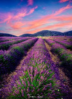 S U M M E R by Thomas Roux on 500px, Murs, Provence, Francia