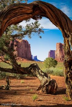An ancient mesquite tree frames a view of the North Window on the floor of Monument Valley, Arizona. An ancient mesquite tree frames a view of the North Window on the floor of Monument Valley, Arizona. Arches Nationalpark, Yellowstone Nationalpark, Parc National, National Parks, National Trust, Monument Valley, Mesquite Tree, Parcs, Photos Of The Week
