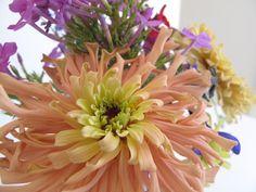 Zinnia elegans 'Cactus Flower Blend' (Botanical Interests) pgmGarden