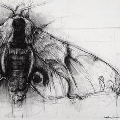 Hawk Moth, continued - April Coppini // aprilcoppini.com