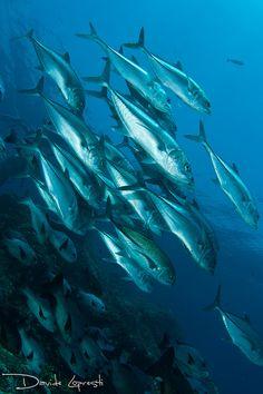 bande de poissons