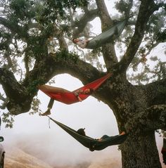 Restless Transplant Camping hammock--must have. Foster Huntington - A Restless TransplantCamping hammock--must have. Foster Huntington - A Restless Transplant Adventure Awaits, Adventure Travel, Voyager C'est Vivre, Foster Huntington, The Last Summer, Go Outside, The Great Outdoors, Summer Vibes, Life Is Good