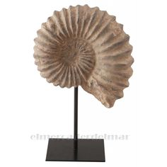 Concha marina fósil.