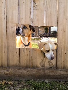 """If you've followed this blog for a while, you know we have two destructive  adorable dogs. """"Nuggets,"""" we like to call them. And if you've li..."""