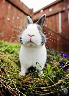 Love those bunny noses!