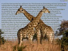 pixels This reminds me of the giraffes I saw in South Africa. Psalm 139, Psalms, Giraffes, South Africa, Bible, Illustration, Animals, Art, Biblia