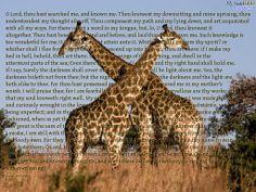 pixels This reminds me of the giraffes I saw in South Africa. Psalm 139, Psalms, Giraffes, South Africa, Bible, Illustration, Animals, Art, Biblia