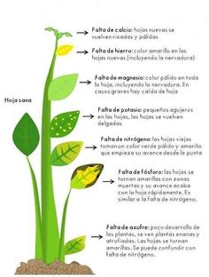 Como detectar la falta de nutrientes en las plantas y como abonar