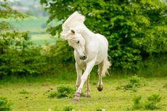 ✲✲✲ Renouveau ✲✲✲ #horse #galloping