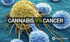 RT @medicaljane: Studies Link #Marijuana To Cancerous Cell Death: http://www.medicaljane.com/2013/12/18/studies-suggest-cannabinoids-may-kill-human-cancer-cells pic.twitter.com/j04xedWuzc