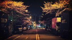 #벚꽃야경 #부산야경 #photography #photographer #부산 #busan #spring #flower #일상 #데일리 #감성 #감성사진 #사진 #여행 #일상공유 #sotong #미러리스카메라 #follow #followme #photo #travel #daily #southkorea by byul2278