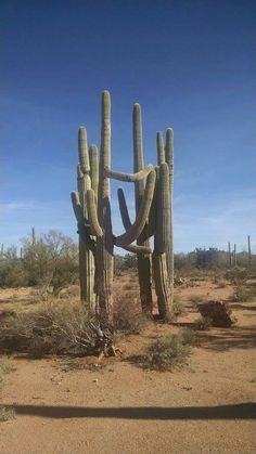 Prickly group hug in the Arizona desert