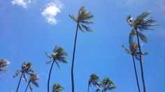 Coconut tree under the beautiful sky