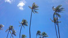 Coconut tree under the beautiful sky