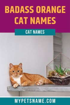 Like any other cat, an orange tabby has its own personality. Do you have a cat that loves going on adventures and is a fearless explorer. Why not give her a name to match? Check out our list of badass orange cat names for options. Cool Pet Names, Badass Names, Cute Names, Tabby Cat Names, Orange Tabby Cats, Love Is Gone, Ginger Cats, Personality, Adoption