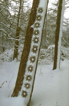 Winter Milepost by Tim Pugh - would like to see this while snowshoeing in the forest-c.