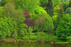 Hackfalls Arboretum - Tiniroto - Gisborne