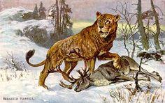 Abbildung aus dem Taschenbuch Höhlenlöwen von Ernst Probst - Zeichnung: Heinrich Harder (1858-1935)