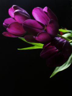 Purple by Juli's pix, via Flickr