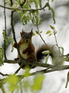 Naaaaa ... siehst du mich? Huhu huhu, ich bin hier im Baum!