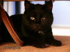 Figaro , onze nieuwe kater.