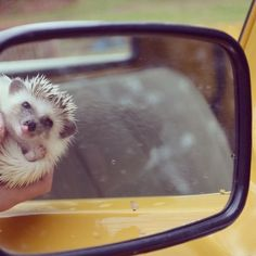The Adventures of the Hedgehog Calico – Fubiz™