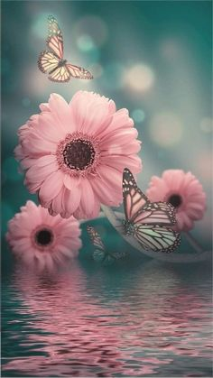 Every good gift and every perfect gift is from above. Android Wallpaper Flowers, Free Android Wallpaper, Flowery Wallpaper, Flower Background Wallpaper, Scenery Wallpaper, Pink Wallpaper Iphone, Cute Wallpaper Backgrounds, Flower Backgrounds, Colorful Wallpaper