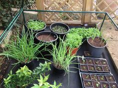 Garden Inspiration, Gardening, Plants, Lawn And Garden, Plant, Planets, Horticulture