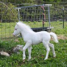 foal: how flipping cute man!