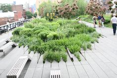 newyork,TheHighLine,High line park,green roof, living roof