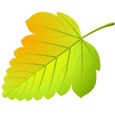Flower Png Images, Arte Popular, Butterfly Art, Cute Funny Animals, Autumn Leaves, Art Drawings, Plant Leaves, Clip Art, Plants