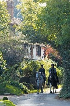 """""""The leafy lanes of suburban heaven cut through the expanse of trees."""" This image was taken during a journey through the Surrey/ Sussex commons. The glories of England by horseback - Telegraph"""
