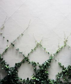 Vines are plants that exhibit a climbing ot trailing habit. Vines look nice for the garden and are easy to maintain. Learn about the various types of vines.