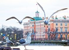 Санкт-Петербург Petersburg Russia, Saints, Sea, Architecture, Street, Animals, Interiors, Twitter, Places To Visit