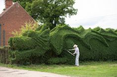 Gardner shapes 100 feet long dragon hedge 4 Ambitious 10 YearGardening Project : John Brookers Green Dragon Hedge