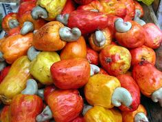 Cashews; who knew? I get to learn about where food comes from on our trip! - San Jose, Costa Rica / anacardi