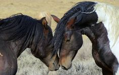 Sign the petition urging Congress not to allow the brutal killing of tens of thousands of America's wild horses and burros.