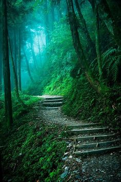 Let's wander into the woods & get lost forever Mysterious Forest by Hung Bo-Wen on Beautiful World, Beautiful Places, Beautiful Pictures, Beautiful Forest, Enchanted Wood, Forest Path, Blue Forest, Misty Forest, Forest At Night