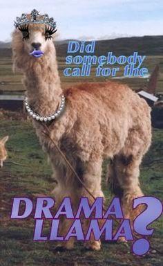Drama Llama--too perfect! @Dana Duncan, @Ashley Sorady