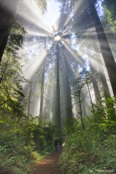 CA Redwoods State Park, CA