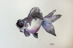 Panda Moor | Black Moor Goldfish Watercolor Artists, Watercolor Paintings, Black Goldfish, Art For Kids, Kid Art, Deep Sea Creatures, Little Fish, Colorful Fish, Love Art